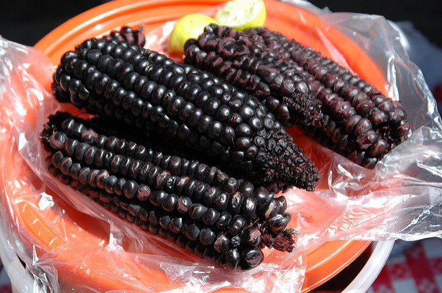 Corn used for modern day Chicha brewing