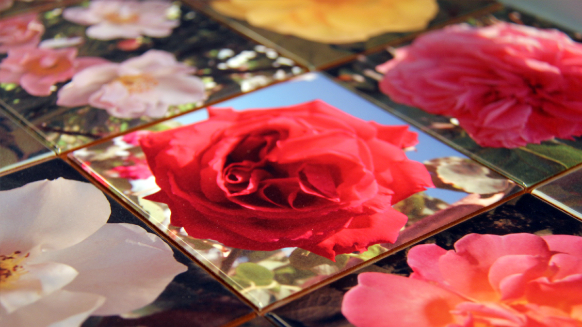 Ceramic tiles with printed with photos of roses